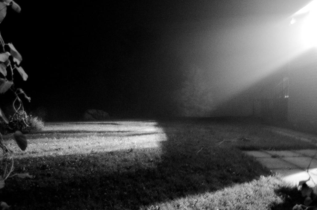 CAO-fog02_DSC7544